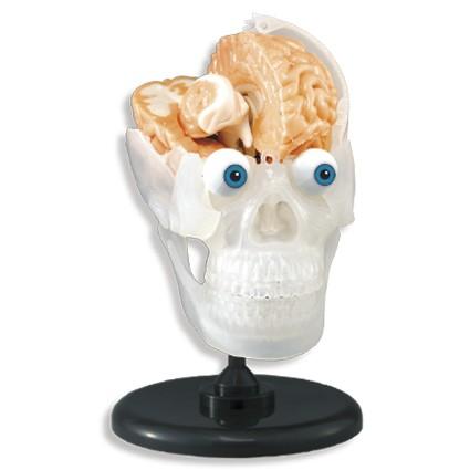 35% off on SmartLab The Amazing Squishy Brain OneDayOnly.co.za